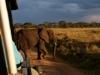Elefant på Serengeti