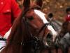 brun-hest-2