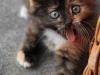 Skør kat